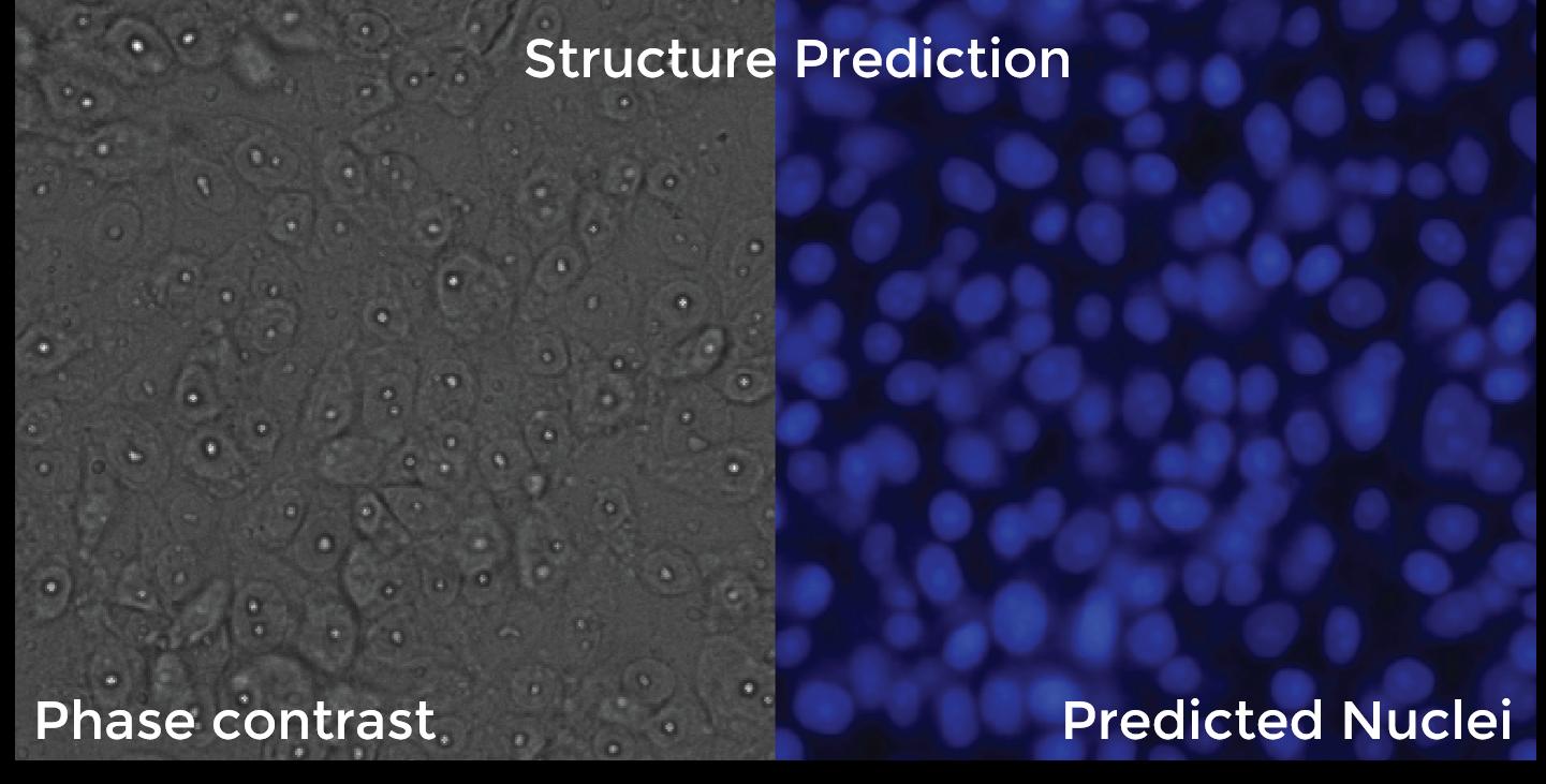 DL prediction model