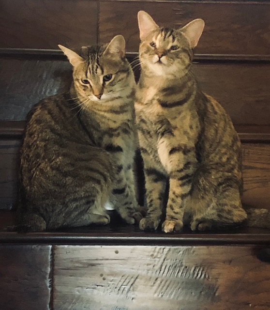 Bobbi and Billi Jean
