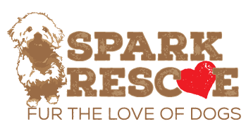 Spark Rescue logo design