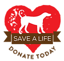 donate to dog rescue