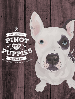 Flyer design for Pinto and Pups