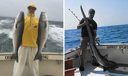 Striper Fishing & Thresher Shark