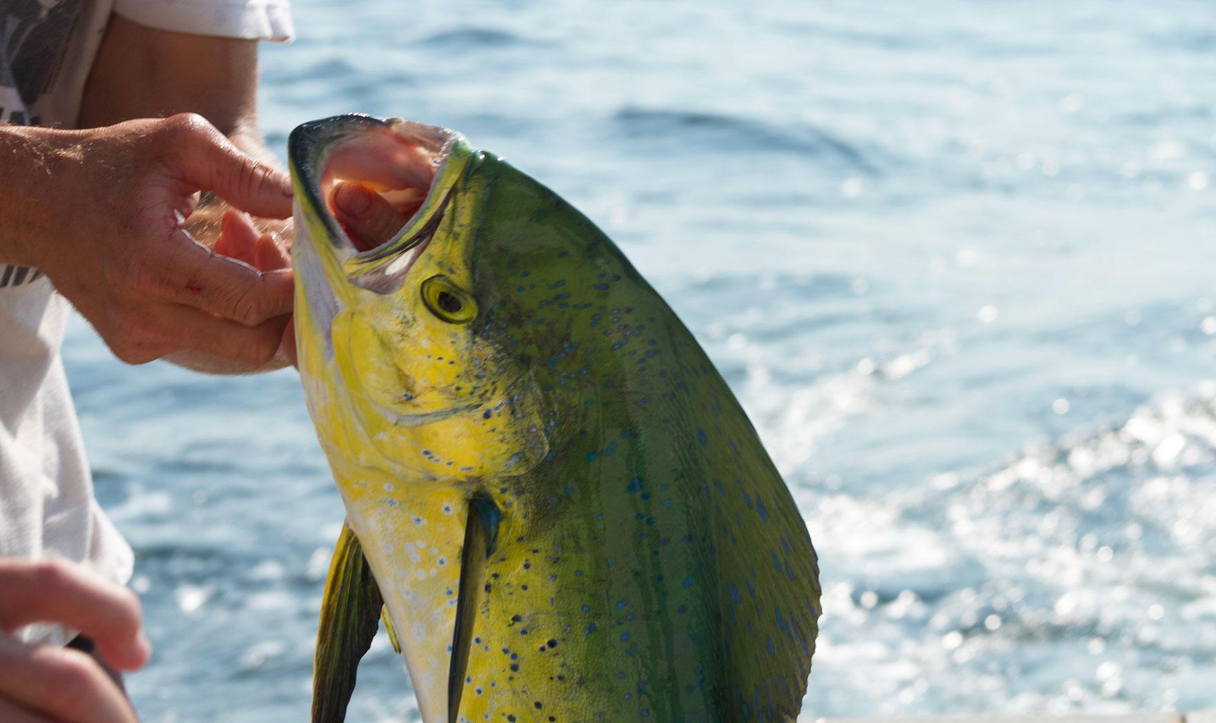 Mahi Mahi Tuna fishing