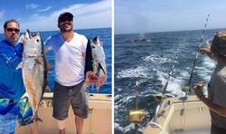 Bluefin Tuna & Whale Surface