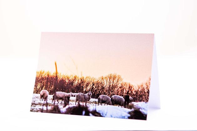 Snow Sheep A6 Card