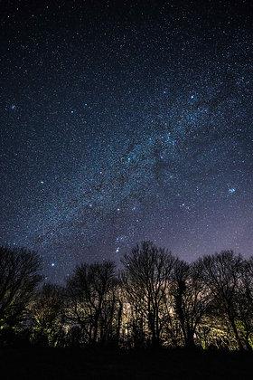 Tree Line Stars - Devon