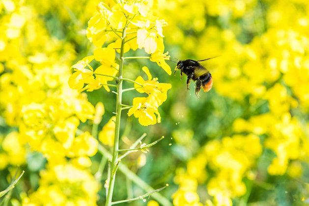 Pollen Spreader