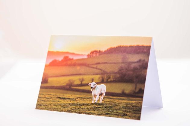 Spring Lamb, Devon A6 Card