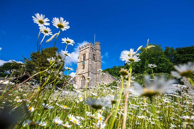 Salcombe Regis Church Daisies