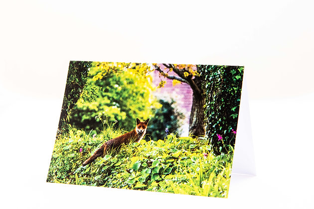 Mr Fox A6 Card