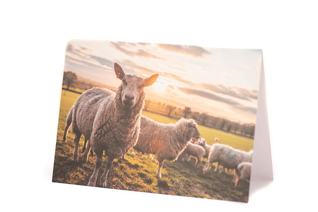 Looking at Ewe A6 Card