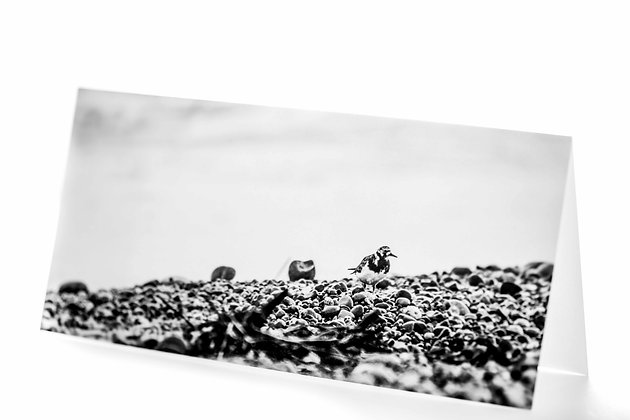 Turnstone Monotone DL Card