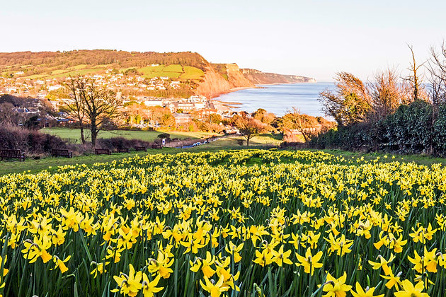 Valley of a Million Bulbs - Sidmouth