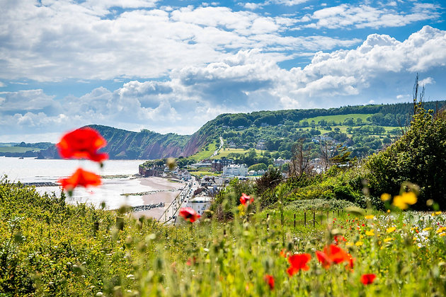 Poppies over the Valley