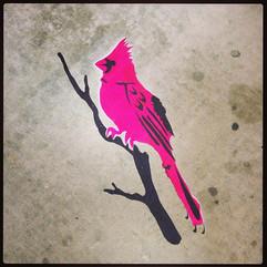 hot pink cardinal