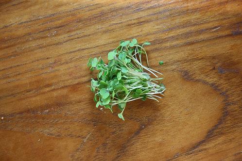 Micro Kale - 60g, organic
