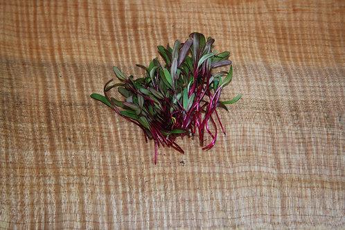 Micro Ruby Red Beet - 30g, organic