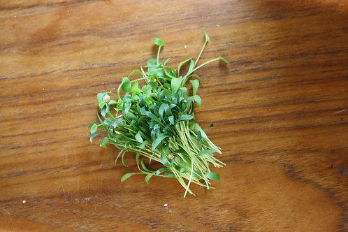 Micro Cilantro - 30g, organic