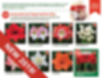 holiday-catalog-image.jpg