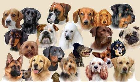 all dogs.jpg