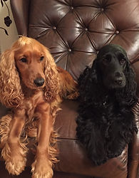FP1 dogs.jpg