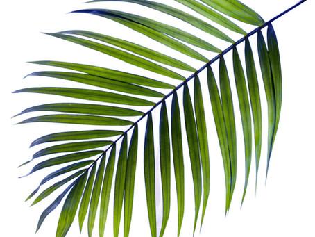 Sermon - Palm Sunday