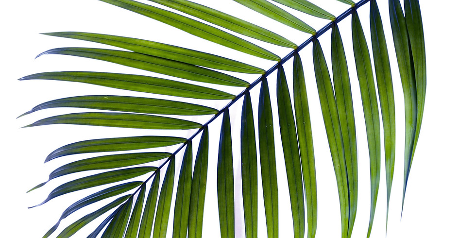 Palm Sunday Worship - March 28, 10:00 AM.  In-person & on Zoom.