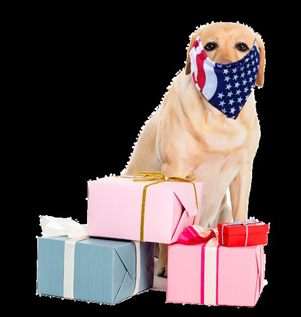 Shop_dog- not xmas_with bandana mask no