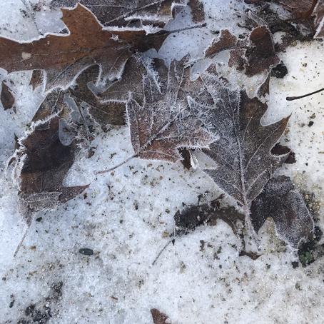Ice Tracings