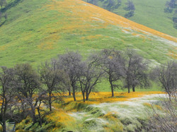 spring foothills 4