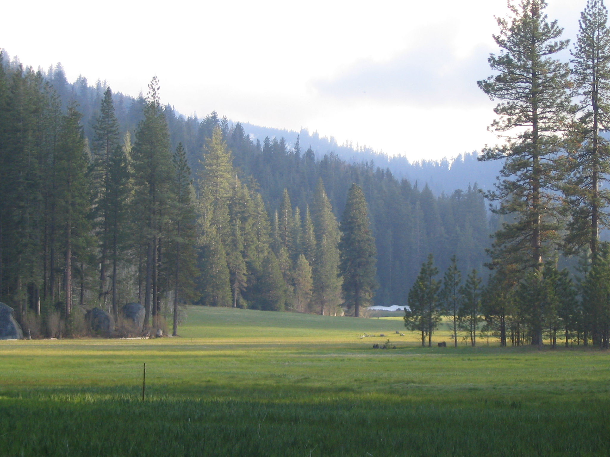 Princess Meadow in Sequoia Forest