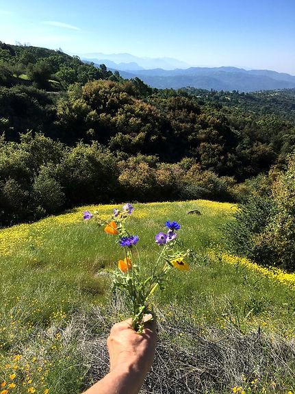 mountains in Pinehurst, California