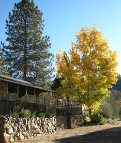 fivespot, fall color