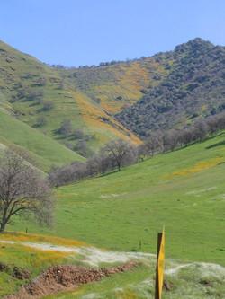 spring foothills 2