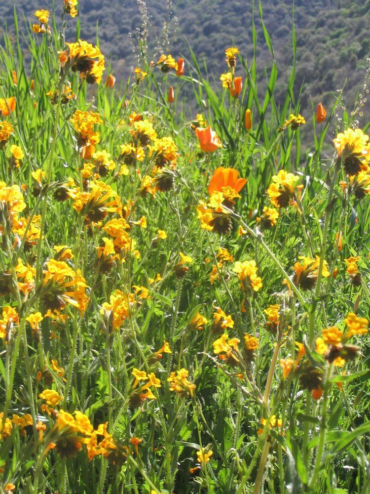 spring foothills 5