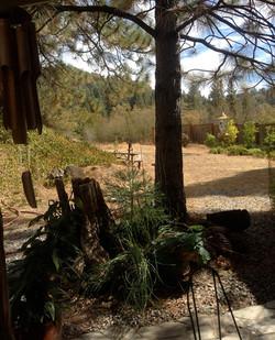 fivespot back yard 2