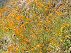 spring foothills 6
