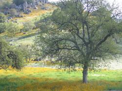 spring foothills 1