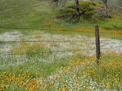 spring foothills 3