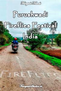 Purushwadi firefly festival, Maharashtra - India