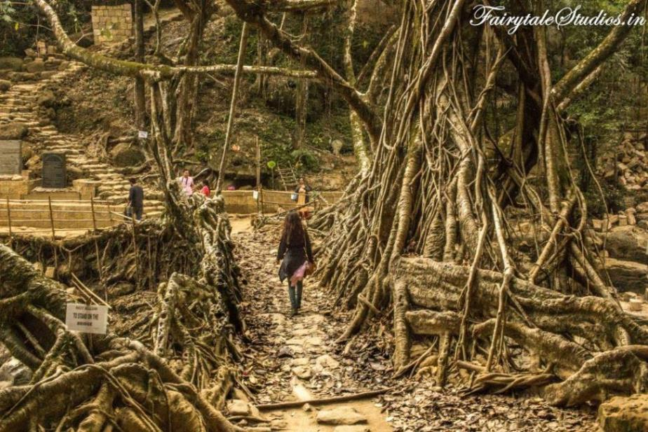 Riwai Living Root Bridge_Mawlynnong_The Meghalaya Odyssey_Fairytale Travel Blogs (5)