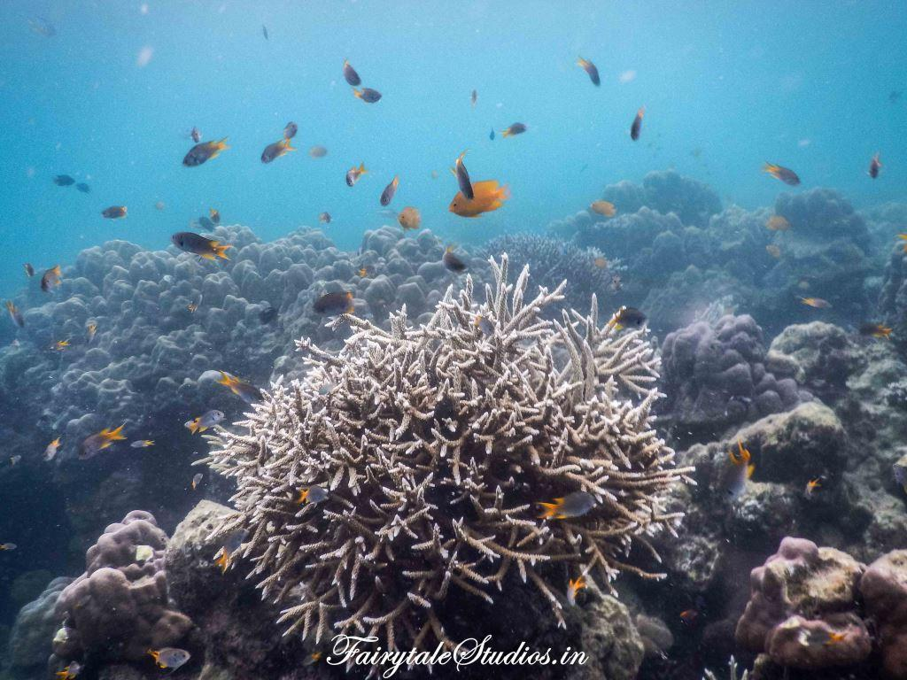 Under water_Scubalov_The Andaman Odyssey_Fairytale Travels (43)