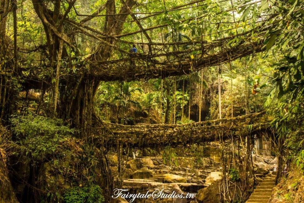 The legendary and one of its kind double decker living root bridges of Nongriat near Cherrapunji