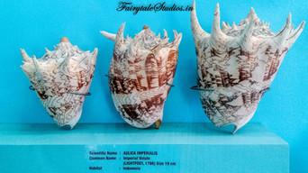 Seashell Museum_Mahabalipuram_Fairytale Travel Blog (13)