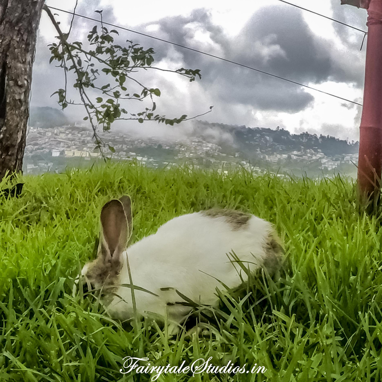 Others_Pear County Kodaikanal_Fairytale Travels