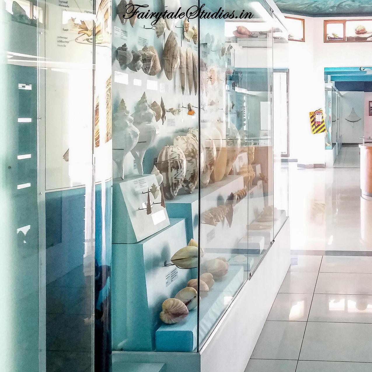 Seashell Museum_Mahabalipuram_Fairytale Travel Blog (29)