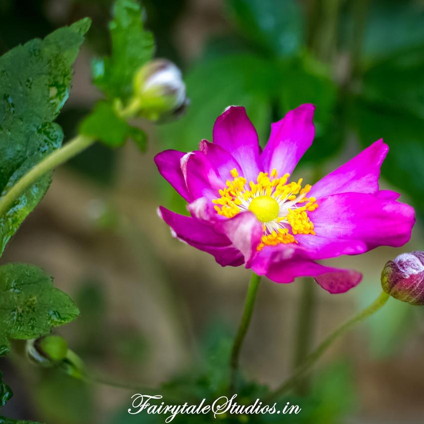 Nature_Fern Creek Kodaikanal_Fairytale Travels (11)