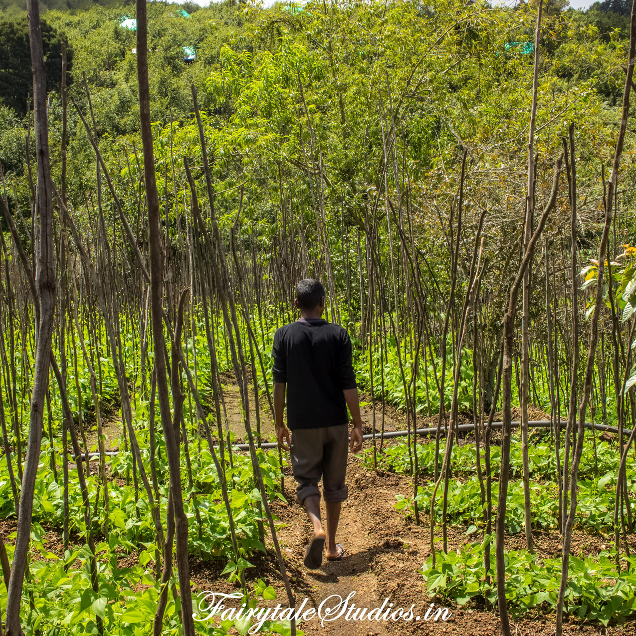 Farm_Pear County Kodaikanal_Fairytale Travels (4)