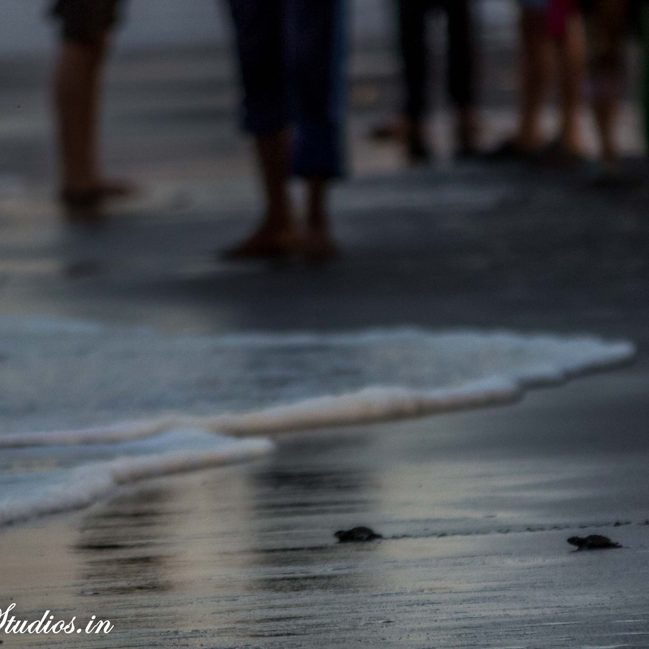 Turtle Festival_Velas_11