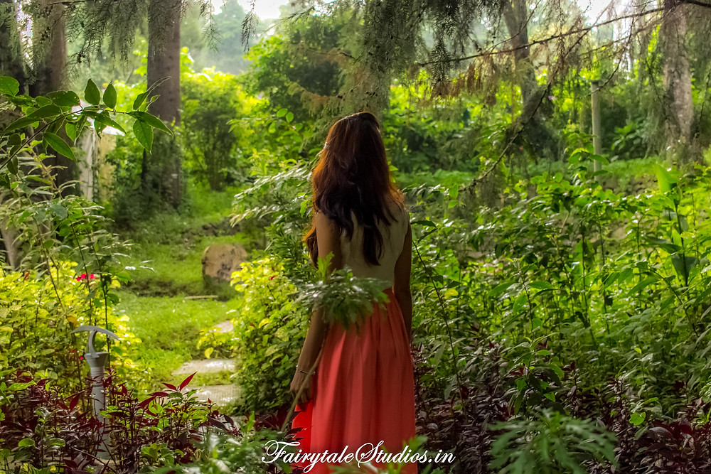 Exploring the enchanted forest in The Fern Creek, Kodaikanal, India